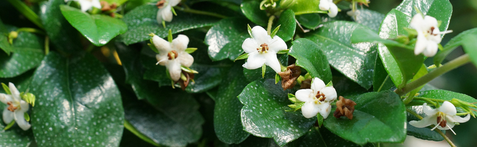 flowering-indoor-1-.jpg