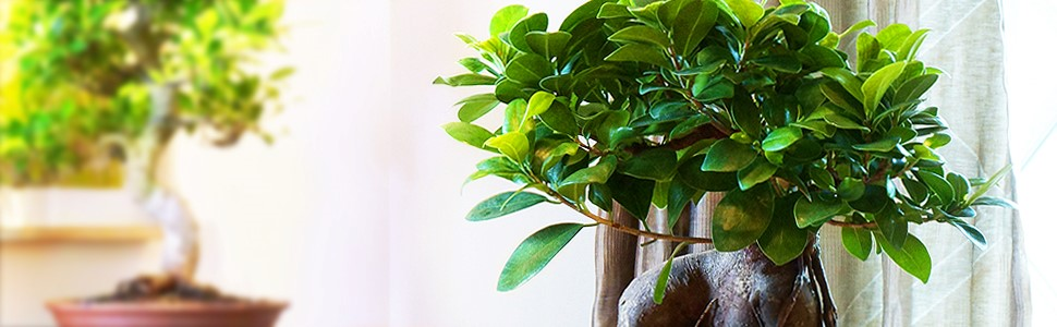 indoor-bonsai-2.jpg