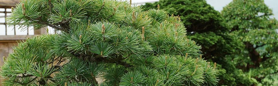 outdoor-specimen-1-.jpg